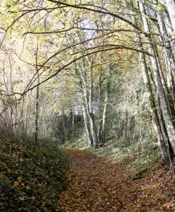 Grassac chemin 1